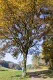 Albero di autunno con la piccola strada Fotografia Stock