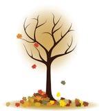 Albero di autunno con le foglie di caduta, foglie di acero Fotografia Stock