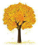 Albero di autunno della siluetta di vettore illustrazione vettoriale