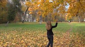 Albero di autunno di scossa della donna archivi video