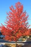 Albero di autunno dopo neve Fotografia Stock