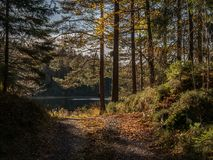 Albero di autunno Fogli di autunno variopinti Foglie su terra Autunno TR fotografia stock