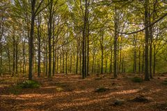 Albero di autunno Fogli di autunno variopinti Foglie su terra Autunno TR immagini stock libere da diritti