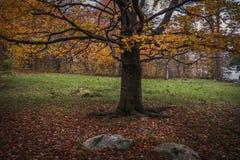 Albero di autunno Fogli di autunno variopinti Foglie su terra Autunno TR immagine stock libera da diritti