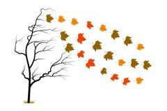 Albero di autunno isolato Fotografie Stock