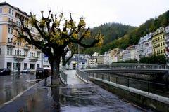 Albero di autunno a Karlovy Vary Fotografia Stock