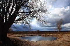 Albero di autunno nel giacimento del vento Fotografia Stock Libera da Diritti