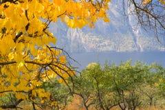 Albero di autunno nella regione di Altai in Russia Immagini Stock