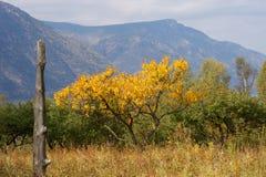 Albero di autunno nella regione di Altai in Russia Fotografia Stock