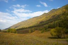 Albero di autunno nella regione di Altai in Russia Immagine Stock Libera da Diritti