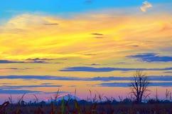 Albero di autunno solo Fotografia Stock