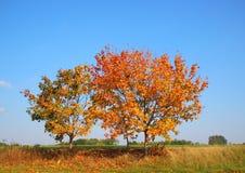 Albero di autunno sulla cima della collina con colore fresco Fotografia Stock Libera da Diritti
