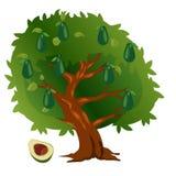 Albero di avocado con i frutti e le foglie verdi illustrazione di stock