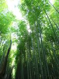 Albero di bambù a Kyoto immagine stock