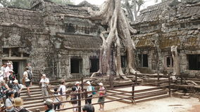 Albero di banyan Cambogia Angkor Wat People Time Lapse 4k video d archivio