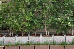 Albero di banyan con il fiore del giglio della pioggia Fotografie Stock
