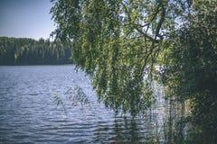 albero di betulla dal lago - effetto d'annata del film Fotografia Stock Libera da Diritti