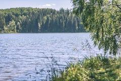 albero di betulla dal lago - effetto d'annata del film Immagine Stock