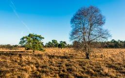 Albero di betulla nudo nella priorità alta di una riserva naturale Immagine Stock Libera da Diritti