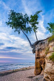 Albero di betulla sulla scogliera Fotografia Stock