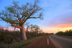 Albero di Boab, Kimberly, Australia Fotografie Stock