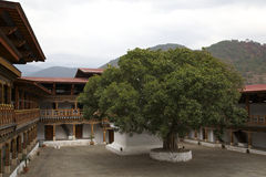 Albero di Bodhi dentro Punakha Dzong Fotografia Stock Libera da Diritti