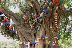 Albero di Bodhi in Lumbini immagini stock