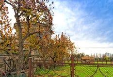 Albero di cachi e chiesa della fattoria Immagine Stock