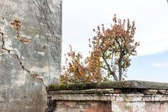 Albero di cachi e chiesa della fattoria Fotografie Stock