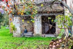 Albero di cachi e fattoria Fotografia Stock Libera da Diritti