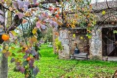 Albero di cachi e fattoria Fotografia Stock
