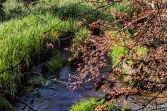 Albero di caduta sopra il fiume immagini stock
