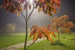 Albero di cenere alla notte con nebbia fotografia stock