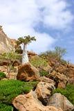 Isola di socotra fotografie stock libere da diritti
