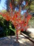 albero di colore Immagine Stock Libera da Diritti