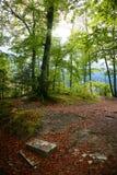 Albero di Colouful in Autumn Day Fotografia Stock Libera da Diritti