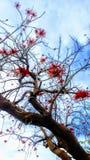 Albero di corallo fotografia stock libera da diritti