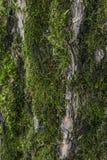 Albero di corteccia Fotografia Stock