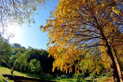 Albero di Cypress calvo variopinto di inverno Immagini Stock