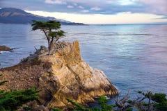 Albero di Cypress solo Immagine Stock