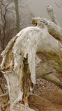 Albero di Dino. Immagini Stock Libere da Diritti