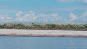 Albero di erba accanto al fiume di Irrawaddy fotografia stock libera da diritti