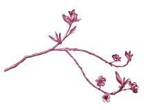 Albero di fioritura Immagini Stock Libere da Diritti