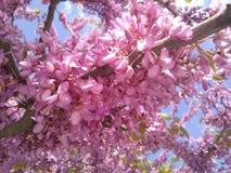 Albero di fioritura immagini stock