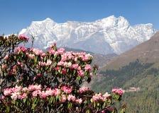 Albero di fioritura del rododendro, primavera in Himalaya fotografia stock