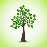 Albero di fioritura della primavera con il fondo delle foglie verdi Immagini Stock Libere da Diritti