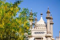 Albero di fioritura di maggiociondolo nel giardino Brighton East Su del padiglione reale immagine stock libera da diritti