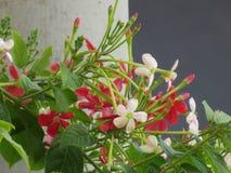 Albero di fioritura multicolore Fotografia Stock