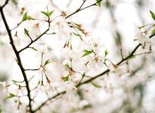 Albero di fioritura nel parco di Rock Creek Immagine Stock Libera da Diritti