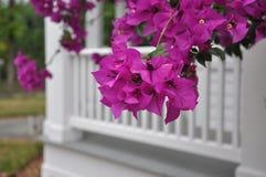 Albero di fioritura a San Antonio, TX Fotografie Stock Libere da Diritti